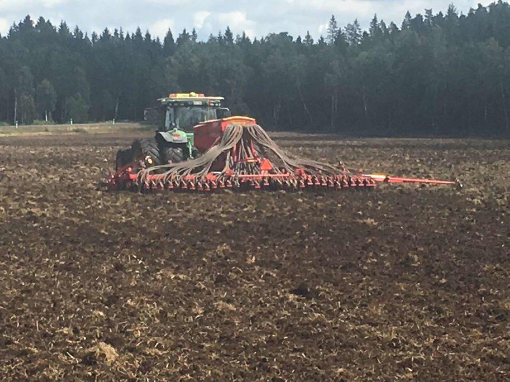 Sådd av rörflen 17 kg frö/ha, 2017-08-02